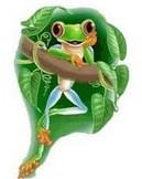 """""""青蛙""""的励志故事——相信自己"""