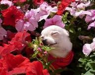"""偷花""""贼""""The Day the Flowers Went Walking"""